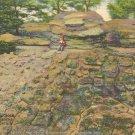 Tortoise Shell Rock, Rock City Gardens, Lookout Mountain postcard