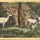 White Fallow Deer in Rock City Gardens, Lookout Mountain postcard