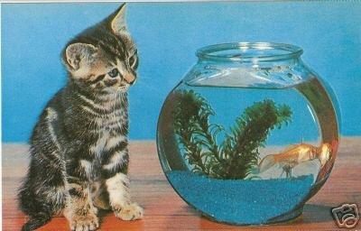 CURIOSITY - Tabby Kitten & Goldfish