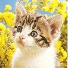 Tabby Kitten