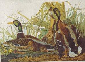 Columbia-Minerva Mallard Duck Crewel Calendar Kit