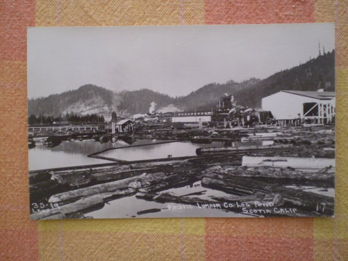 VINTAGE POSTCARD PACIFIC LUMBER CO LOG POND SCOTIA CA rppc