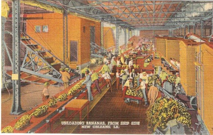 Unloading Bananas from ship side, New Orleans, LA postcard vintage