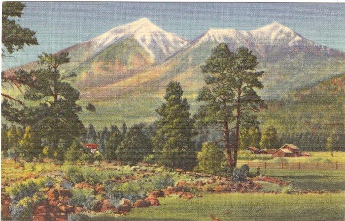 San Francisco Peaks, Flagstaff Arizona postcard  vintage