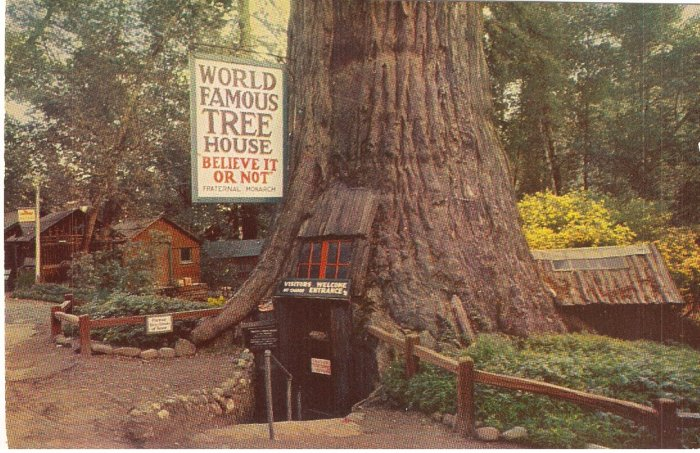 World Famous Tree House Laytonville vintage postcard