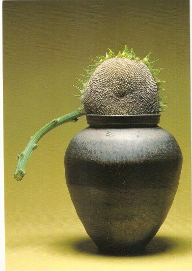 Hiroshi Teshigahara Sun Flower in Ceramic Pot postcard sunflower