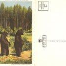 Twin Cub Bears Yellowstone National Park brief card postcard