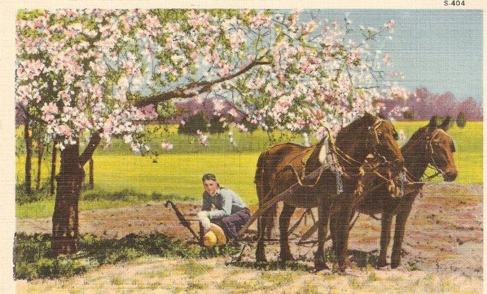 Rural Scene vintage postcard trees flowers horse farmer