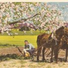 Rural Scene vintage postcard trees flowers horse farmer