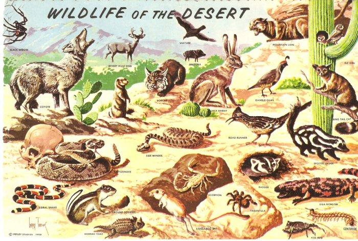 Wildlife of the Desert Petley Studio vintage postcard