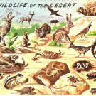 Wildlife of the Desert Petley Studio vintage postcard
