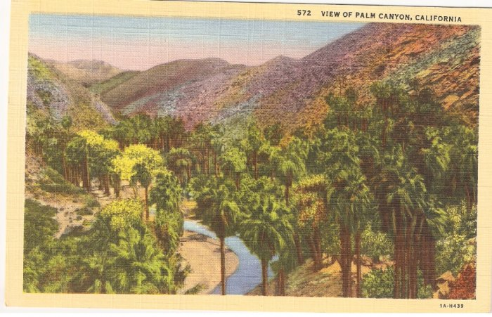 Palm Canyon California postcard vintage