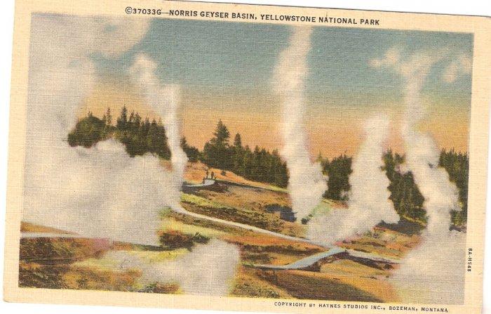 Norris Geyser Basin Yellowstone National Park vintage postcard