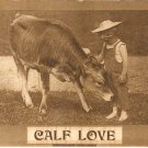 Calf Love 1910 vintage postcard