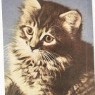 Mitzi Cat Standard Arts vintage postcard