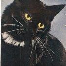 Sultan Cat Standard Arts vintage postcard