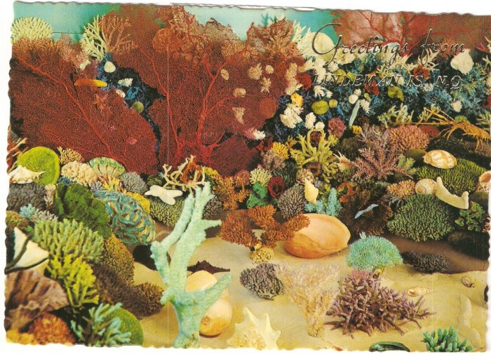 Lindeman Island Australia Great Barrier Reef Shell Coral postcard