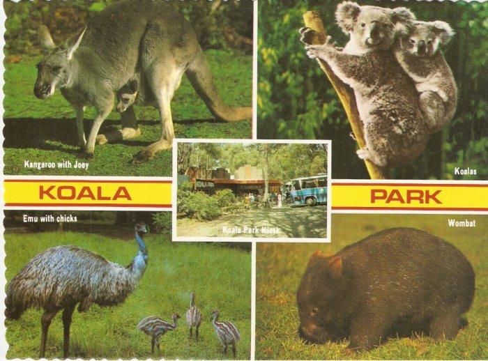 Koala Park West Pennant Australia postcard