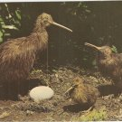 Kiwi Family Egg New Zealand vintage postcard