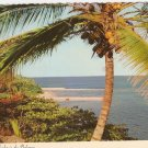 Tropical Splendor Bahamas Coconut H O'Brien vintage postcard