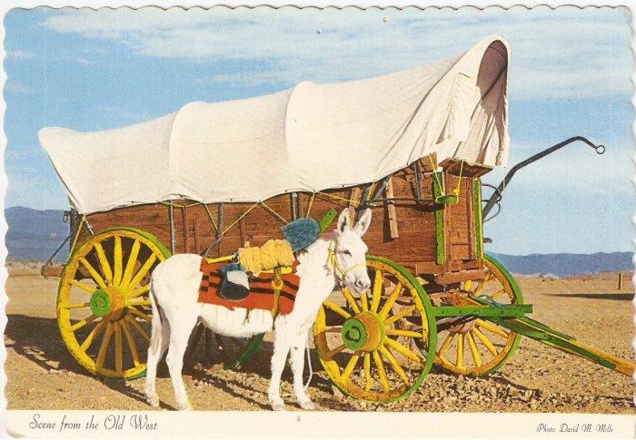 Old West Scene David Mills mule conestoga wagon vintage postcard