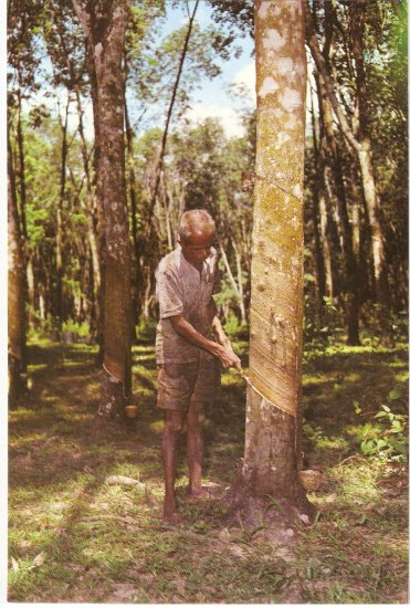 Rubber Tree Tapper Malaysia vintage postcard