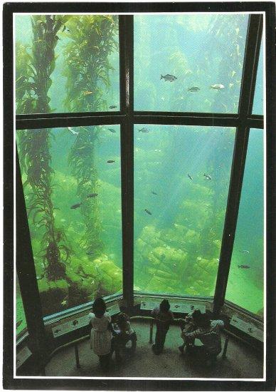 Kelp Forest Monterey Bay Aquarium California vintage postcard