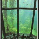 Kelp Forest Monterey Bay Aquarium California vintage postcard