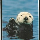 Sea Otter Monterey Bay Aquarium California vintage postcard