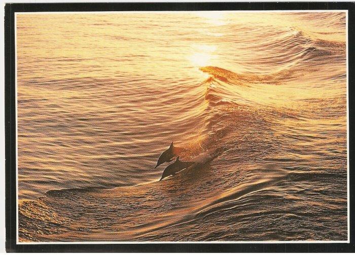 Dolphins en route Monterey Bay Aquarium California vintage postcard