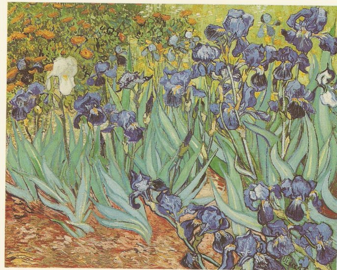 Vincent Van Gogh Irises J Paul Getty Museum Malibu California 1990 postcard