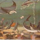 Miami Seaquarium Aquarium Florida vintage postcard