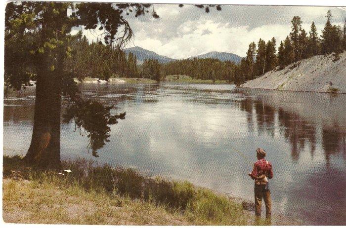 Fishing Yellowstone River vintage postcard