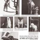 French Line Dogs Cruise Ship Vintage Ad 1965