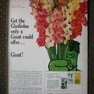 Gladiolus Green Giant Glads Vegetables Vintage Ad 1968