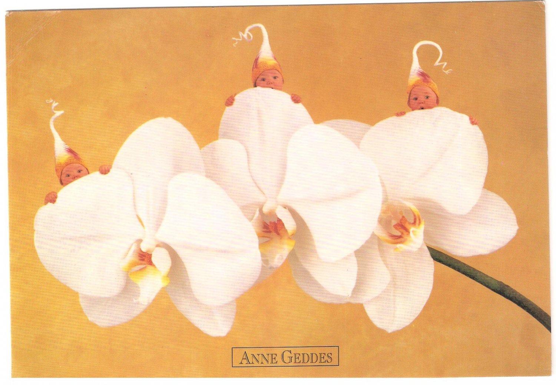 Anne Geddes Postcard 1995 605-095 Baby Phalaenopsis Orchid Flower 4x6