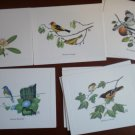 Birds America Mark Note Cards Blank Chuck Ripper Cardinal Mockingbird Bluebird Oriole tanager