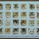 B Shackman Stickers Cats Kittens Kitties 21303 Hong Kong Vintage 1982