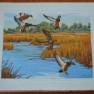 Ciernia Litho Ducks Mallard in Flight CP 12602 Print Birds Marsh Vintage