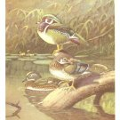 Allan Brooks Bird Portrait Wood Duck Vintage Print 1960