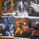 Cavalia Horse Lot 21 Print Photographer Folder