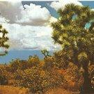 Joshua Tree Postcard Southwest Darwin Van Campen Petley