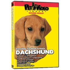 Everything You Need To Know Dachshund Pet Video