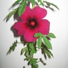 Hibiscus Radiatus Monarch Rosemallow 75 Seeds BULK