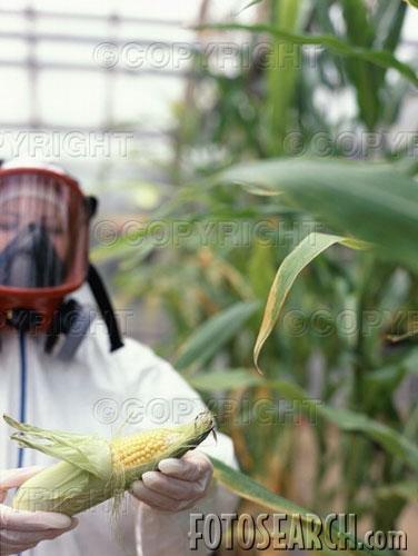 Biology   Growth & Development in Plants