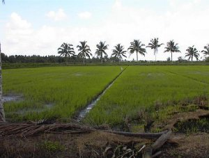 Environmental Geology -  Soils &  Environment