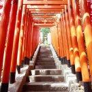 East Asian History - Premodern Vietnam & Korea