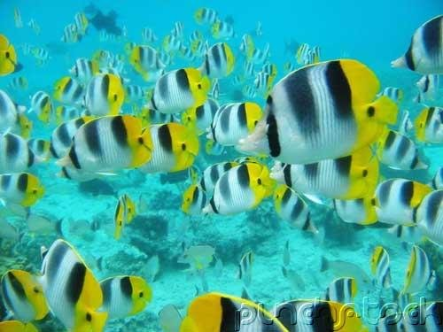 The Ocean - Ocean Life - Marine Lifestyles