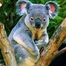 Mammals - Small Herbivores - Insect-Eaters & Marsupials  - III