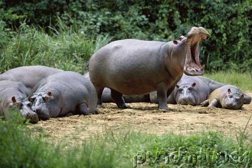 Mammals - Large Herbivores - Part I